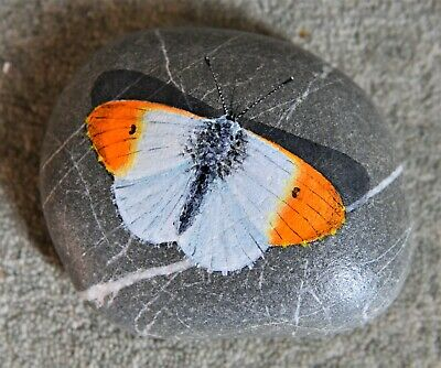 Hand Painted Cobble Stone Pebble Orange Tip Butterfly Paperweight Handmade