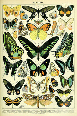 X3155 Antique Butterfly Vintage Variety Of Insects Science Chart Art Silk Poster