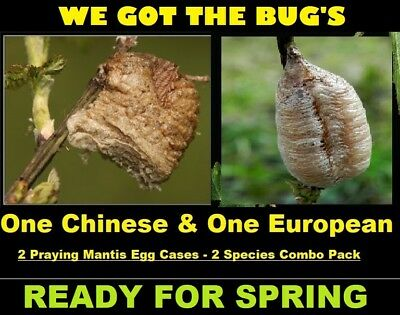 One Chinese + One European   FREE HATCHING BAG  2 LIVE Species Combo Pack