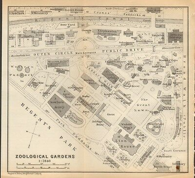 1911 - Antique Map - London - Plan, Regent's Park, Zoological Gardens