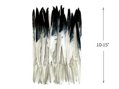 10 Pieces - White Tipped Black Goose Pointers Long Primaries Wing Feathers Craft