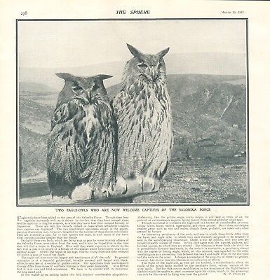 1918  Antique Print- Ww1 - Two Eagle Owls With The Salonika Force