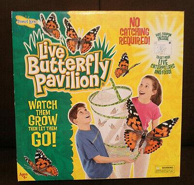 Live Butterfly Pavilion Observation Habitat Garden Insect Lore New