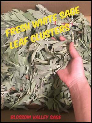 1/2 lb FRESH White Sage leaf clusters (clippings, sprigs, leave tops) combo deal