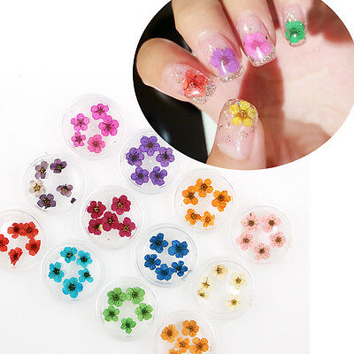 12 Colors/wheel Real Dry Dried Flower Leaves 3D UV Gel Tips Nail Art Decoration