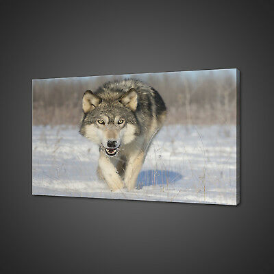Timber White Wolf Canvas Picture Print Wall Art Home Decor Free Fast Delivery