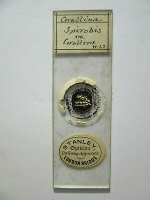 1800's Antique Scientific Glass Slide Corallina Stanley Of London Original