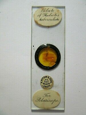 1800's Antique Scientific Glass Slide W Watson Of London Original fc69
