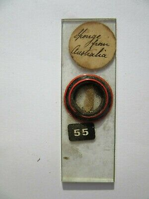1800's Antique Scientific Glass Slide Australian Sponge Original fc69