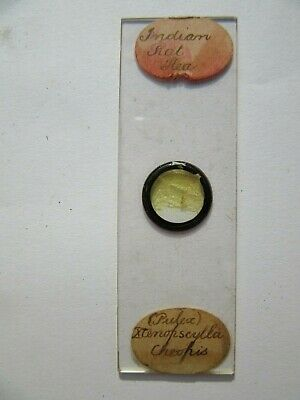 1800's Antique Scientific Glass Slide Indian Rat Flea Original fc69