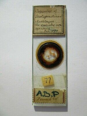1800's Antique Scientific Glass Slide Original fc69
