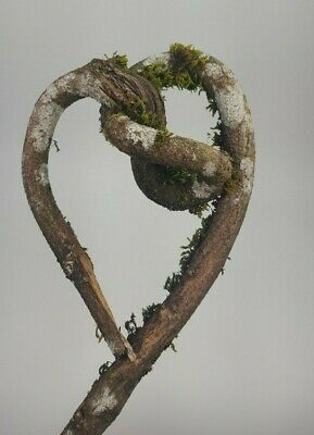Heart Shaped Tree Branch Nature Art Twisted Decoration Home Decor Crafts 18x5x6
