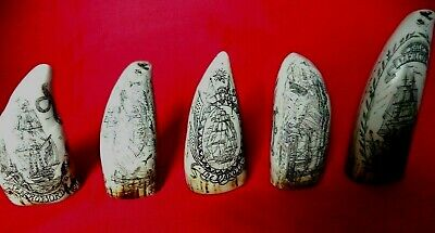Five Faux Scrimshaw Miniature Collectable Teeth  Museum Display Quality SRP £70