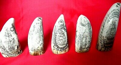 Five Faux Scrimshaw Miniature Teeth Ideal For Cabinet Display SRP £70