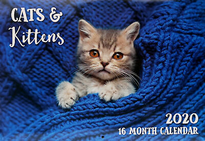 Cats & Kittens - 2020 Rectangle Wall Calendar 16 Month New Year Xmas Decor Gift