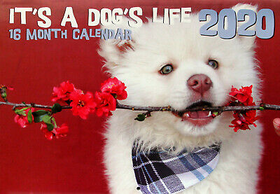 It's A Dog's Life - 2020 Rectangle Wall Calendar 16 Months New Year Decor Gift