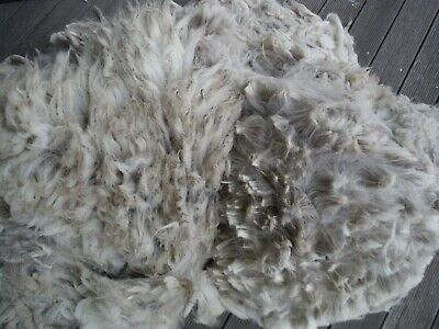 Alpaca Fleece. Solid White. Skirted Pieces. Bingo. 16 cm long