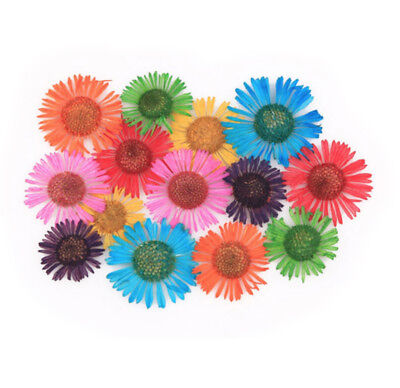 Pressed flowers, daisy fleabane red orange turquoise yellow pink green purple