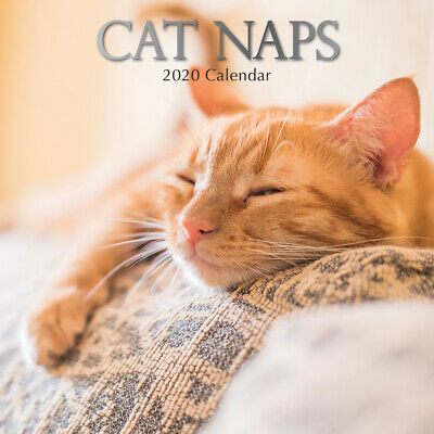 Cat Naps  - 2020 Premium Square Pets Wall Calendar 16 Months New Year Decor Gift