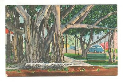 Banyan Tree St. Petersburg Florida Linen Vintage Postcard AN60