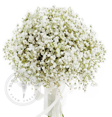 Baby's Breath (5 Bunches)