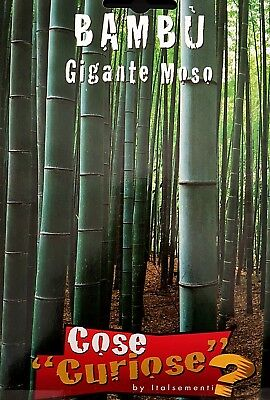 Phyllostachys Edulis 1 Pack Seeds 1 Pack of Seeds Bamboo Giant Moso