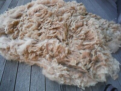 Alpaca Fleece. Saddle Only.  Light Fawn. Aladdin. 18cm Long!!