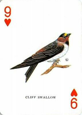 Single Swap Playing Card Named Cliff Swallow Bird Hearts Vintage