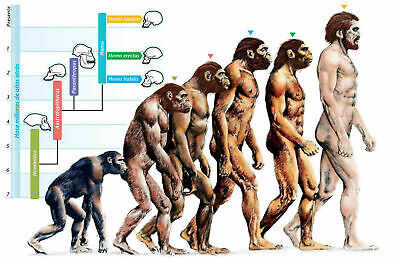 249620 The Evolution of Humans Art WALL PRINT POSTER AU