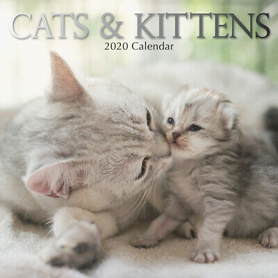 Cats & Kittens 2020 Premium Square Pets Wall Calendar 16 Months New Year Gift