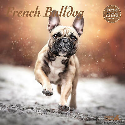 French Bulldog 2020 Deluxe Calendar
