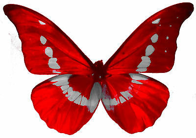 24 x Pretty RED Stripe Butterflies Edible Decorations Cup Cake Toppers Rice Pape