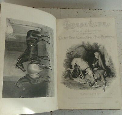 Vintage Book c1867 Rural Life Horses Shooting, Cattle, Sheep, Poultry Farming