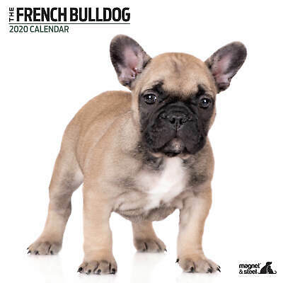 French Bulldog 2020 Modern Calendar