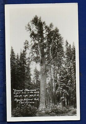 "RPPC ""General Sherman"" Sequoia  National Park - Hammond's Studio, Porterville CA"