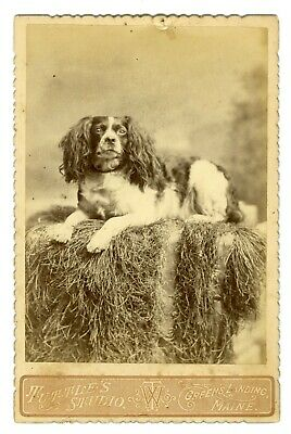 Attentive Dog Cabinet Card