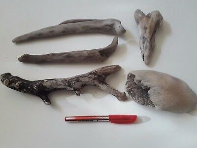 Driftwood 5 Character, Nice Unusual Shapes Arts Crafts Flower Display Sculpture