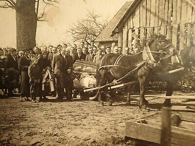 early 1900 POST MORTEM COFFIN HORSES LARGE ORIGINAL ANTIQUE PHOTO ON CARDBOARD