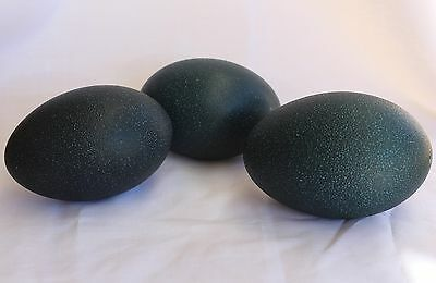 Blown Emu Egg (1 egg)