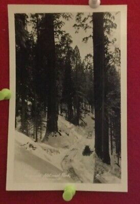 RPPC Sequoia  National Park - Hammond's Studio Porterville CA