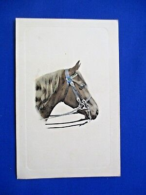 Gorgeous Old Edwardian Antique Collectors Postcard of  Horse FREEPOST
