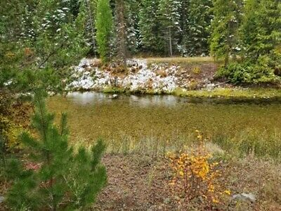 GOLD MINE Historic St. Regis MT Ace High Placer 20 Acre Gold Mining Claim