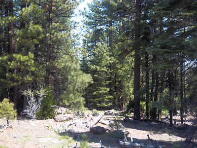 Northern California Remote Mountain Lot   Foreclosure