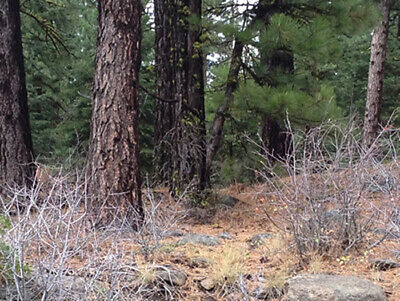 Northern California Remote Mountain Lot  With Power