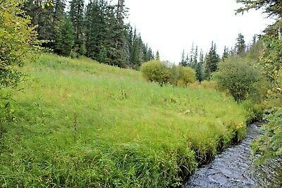 South Dakota Gold Mine Prime Mining Spring Creek Placer Claim Panning Sluice