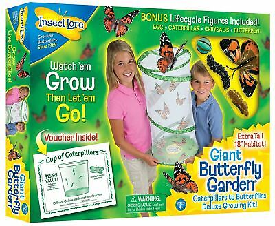 Insect Lore - GIANT Live Butterfly Garden Hatching Kit