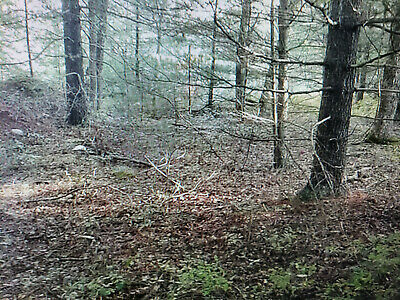 New York 5.44 acre vacant buidable lot in barryville ny, sulivan County,,