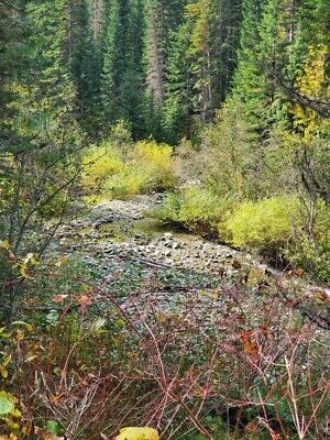GOLD MINE Historic St. Regis MT Humdinger Placer 20 Acre Gold Mining Claim