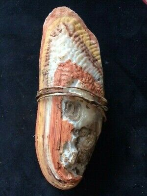 Very Rare Freshwater Shell Carrying Vessel With Australites: Aboriginal