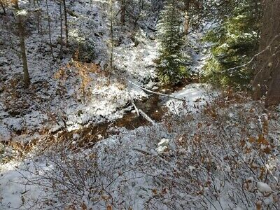 GOLD MINE Historic Avon MT Black Eyed Susan Placer 20 Acre Gold Mining Claim